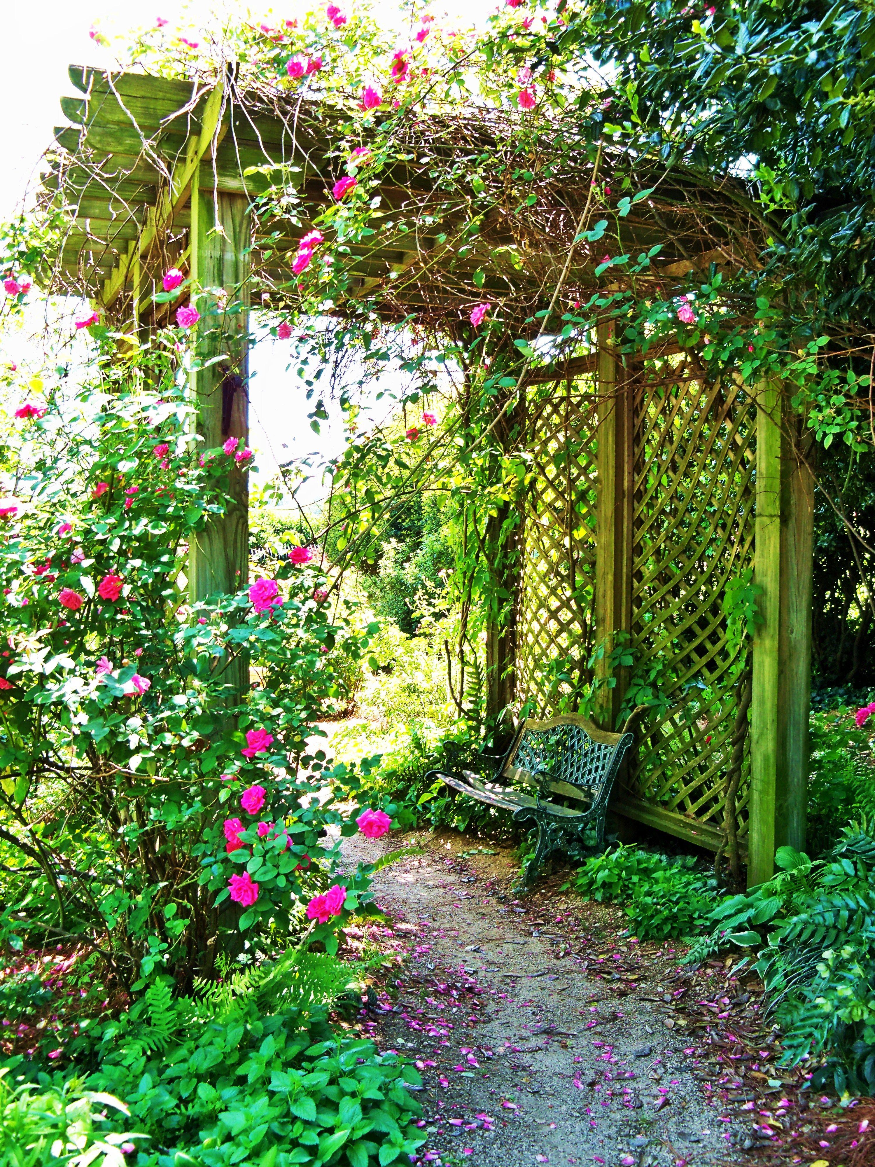 McGill Rose Garden In NoDa Of Charlotte, NC
