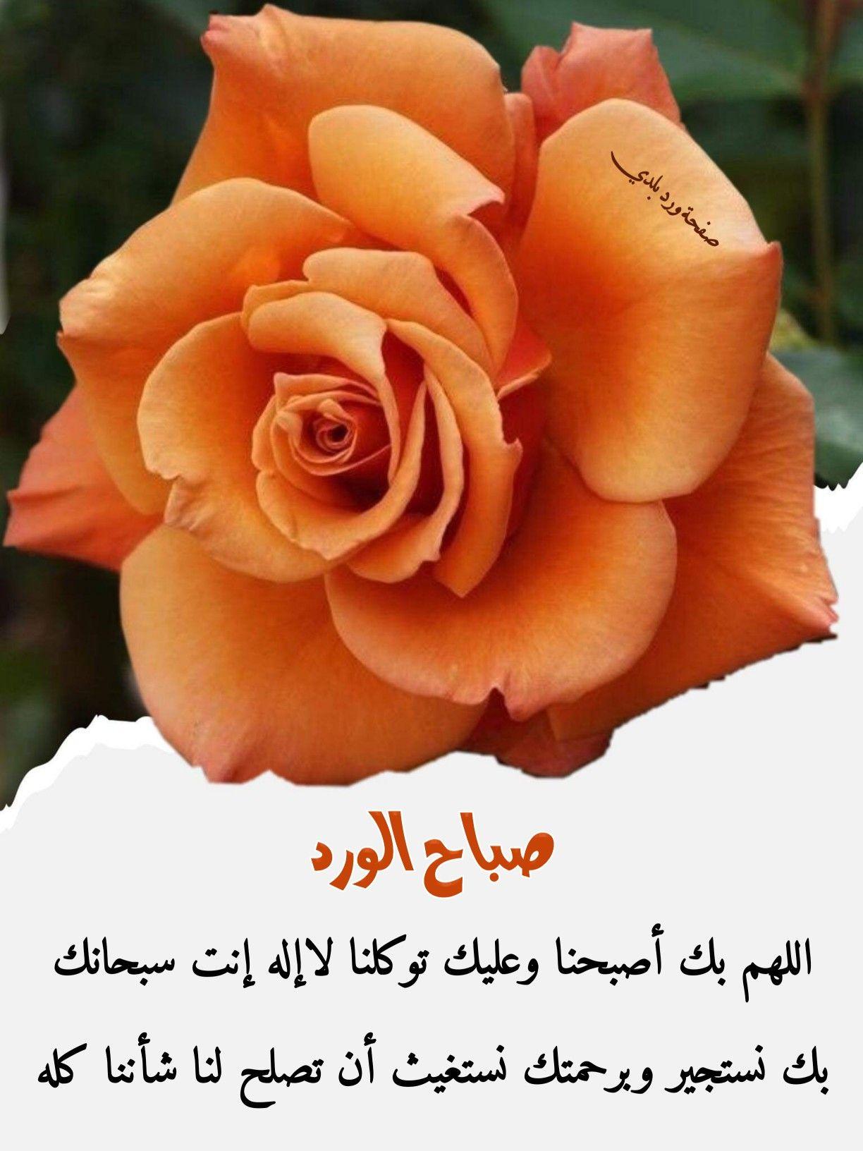 Pin By ورد بلدي On ورد بلدي Flowers Rose Plants
