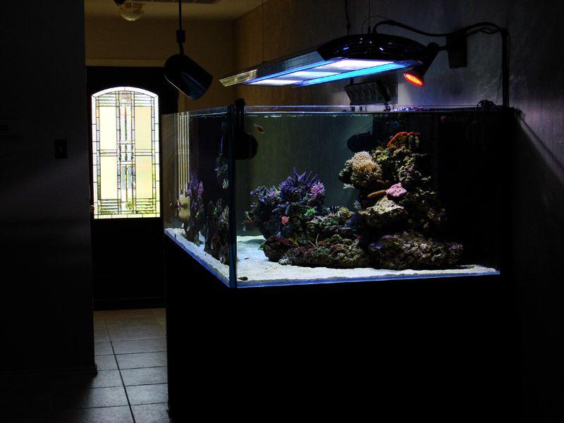 Reef Designs   Posted In Reef News Search More Modern Reef Aquarium Design