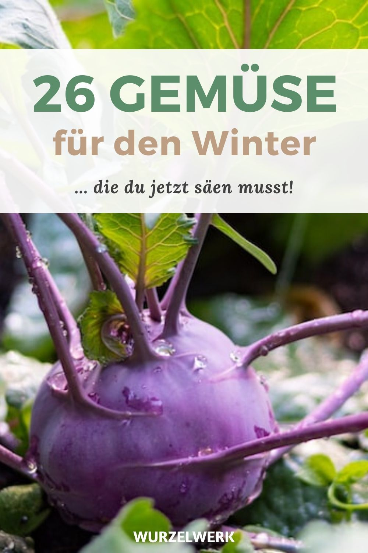 26 Gemüse, du im Winter anbauen kannst