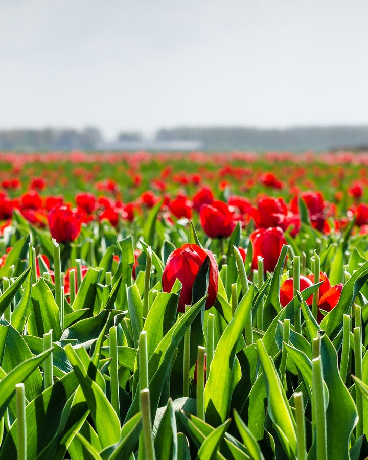 500px / Photo The one by Sven Verbruci ... reminds me of Holland...