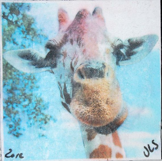 Original Photo Image Transfer Magnet Giraffe 4x4 by widophotoart, $7.50
