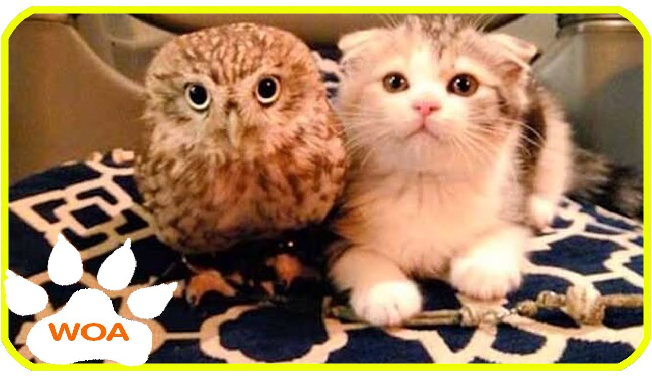 The Owl And Kitten Friendship Top Video Channel Compilation Funny Animals Fluffy Animals Cute Animals