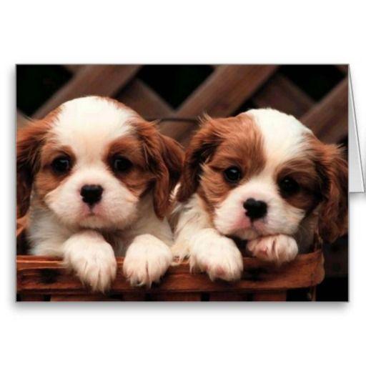 Adorable Puppy Twins Card Zazzle Com Cute Puppy Wallpaper
