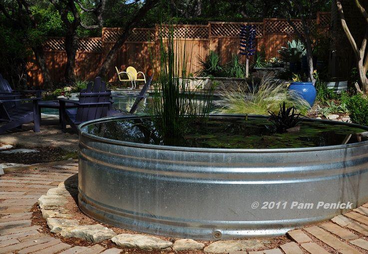 Madame Ganna Walska water lily, pond diva | Digging