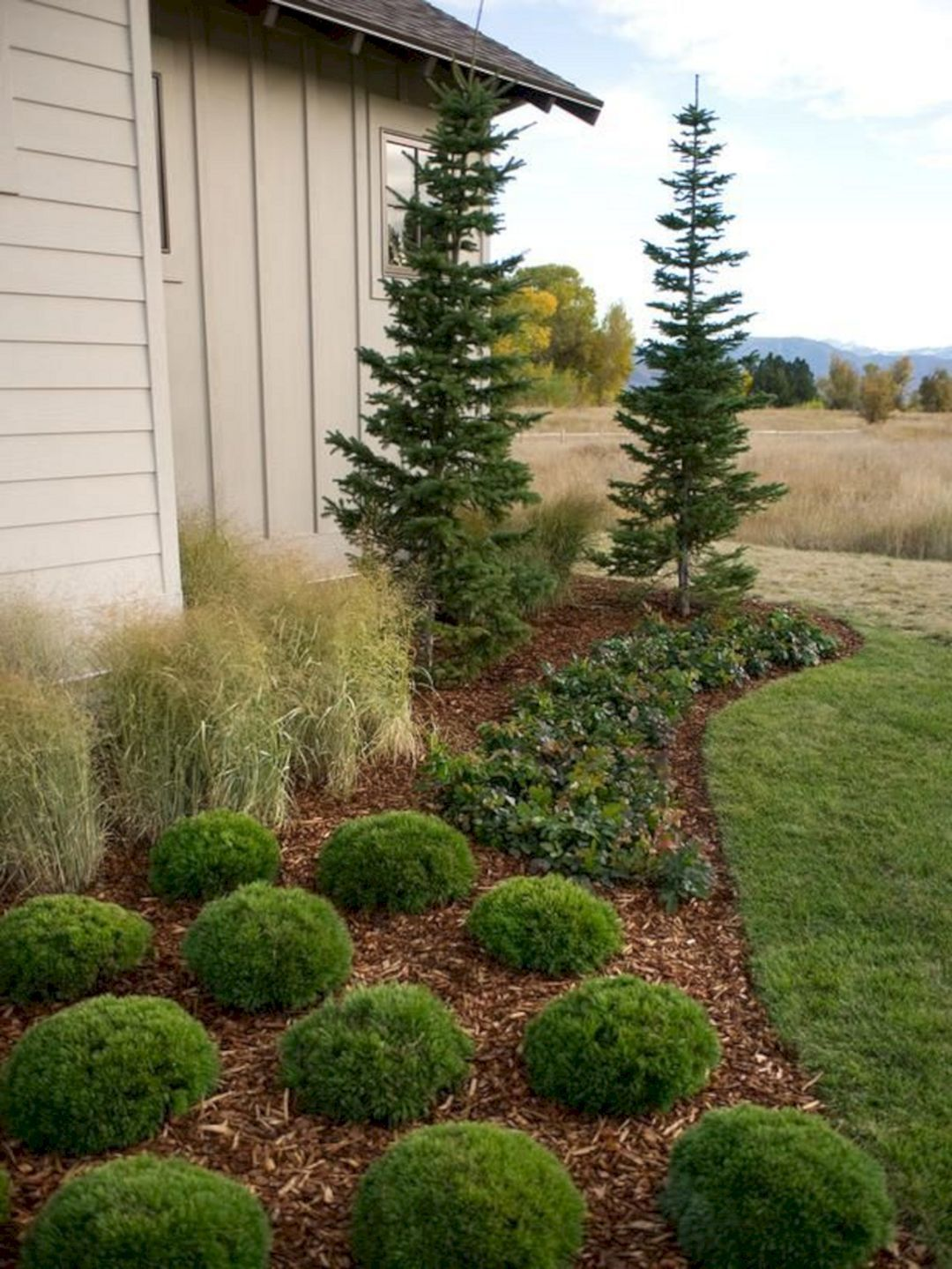 front yard garden with dwarf pine