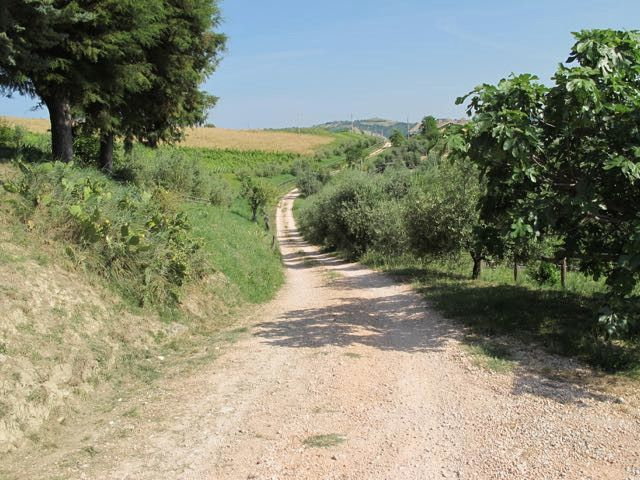 Typical landscape of the #Marche region, in #Ripatransone