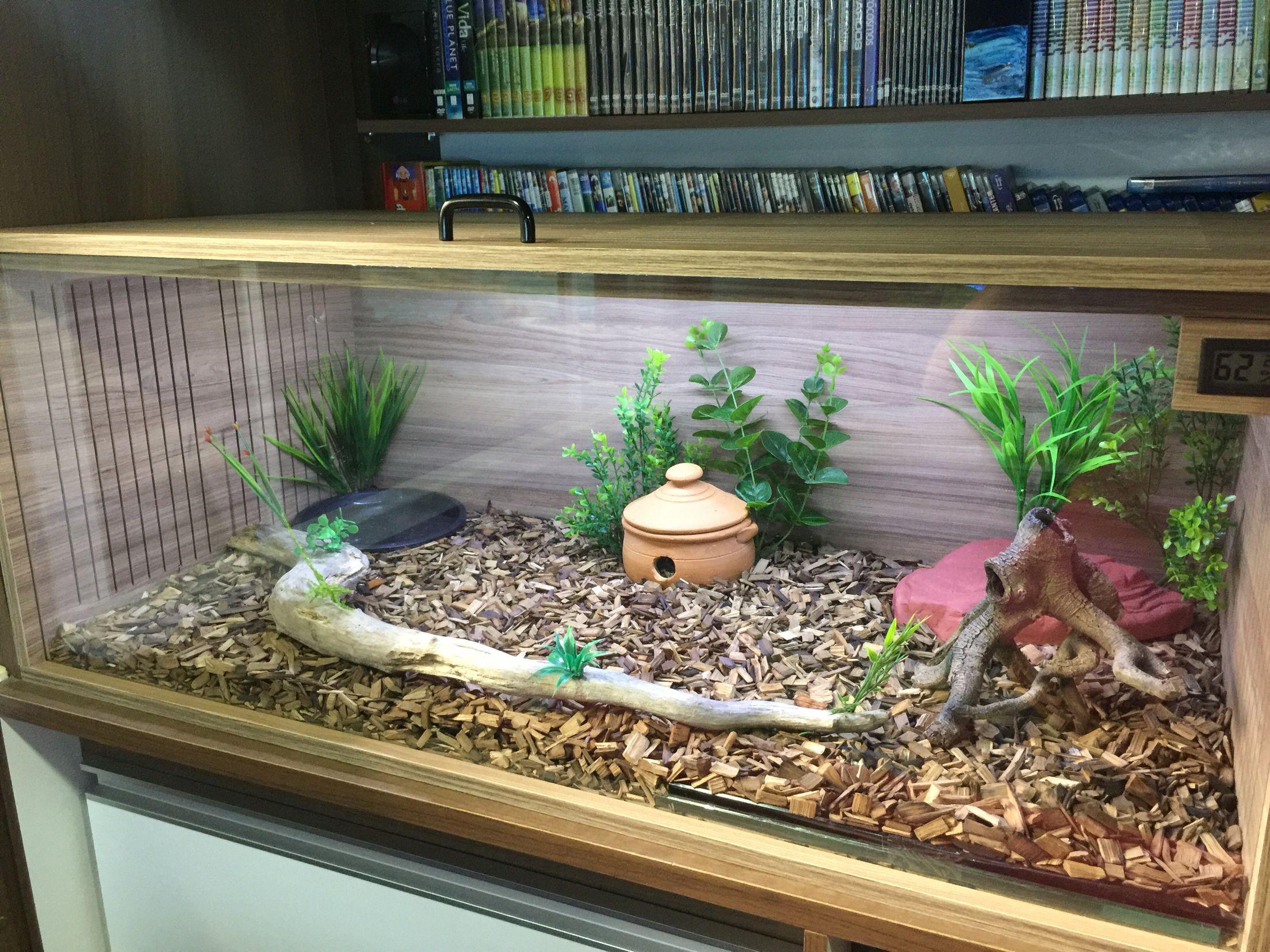 Vivarium Corn Snake Snek Snake Terrarium Pet Snake Snake Cages