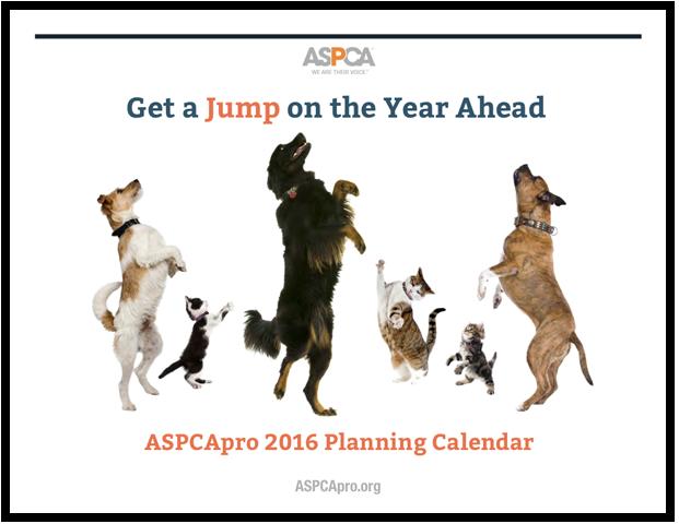 Pin on Pet Adoption Marketing Ideas