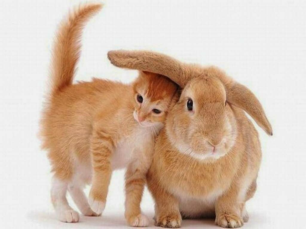 10 Super Cute Cat and Bunny Twins Photos! | Meow2Meow