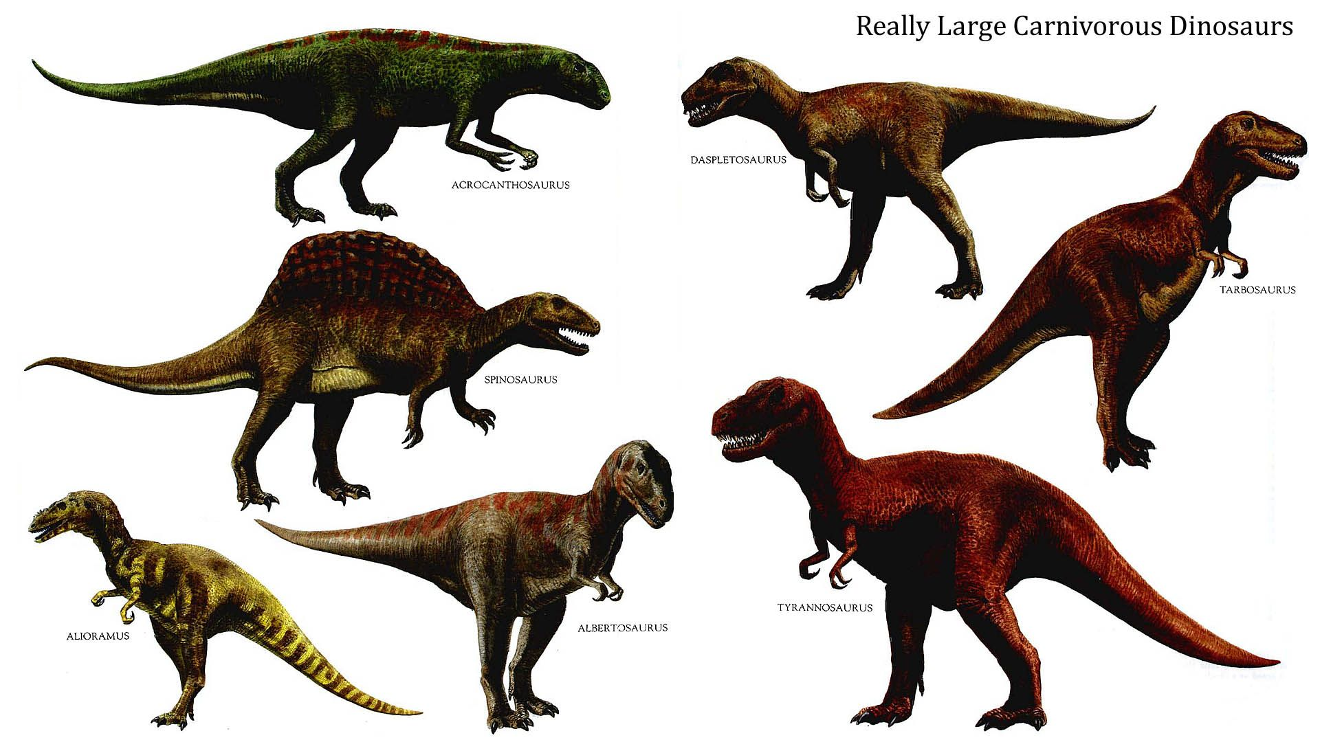 Dinosaurs Images Really Large Carnivorous Dinosaurs Hd Wallpaper And Background Photos 39775255 Dinosaur Background Dinosaur Pictures Dinosaur Wallpaper
