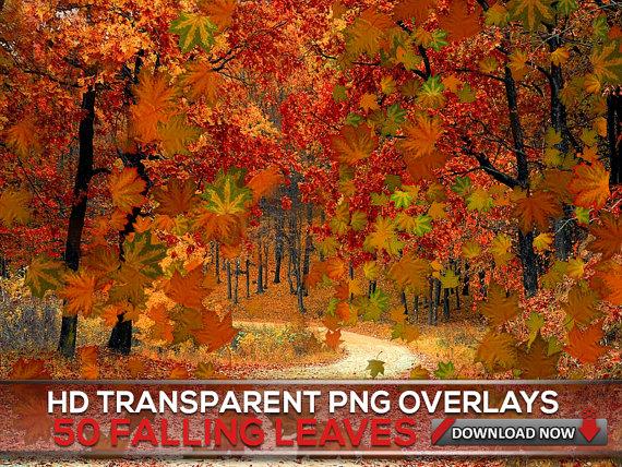 50 Transparent Png Maple Falling Leaves Overlays Autumn Leaf Etsy Digital Backdrops Digital Background Photoshop Overlays