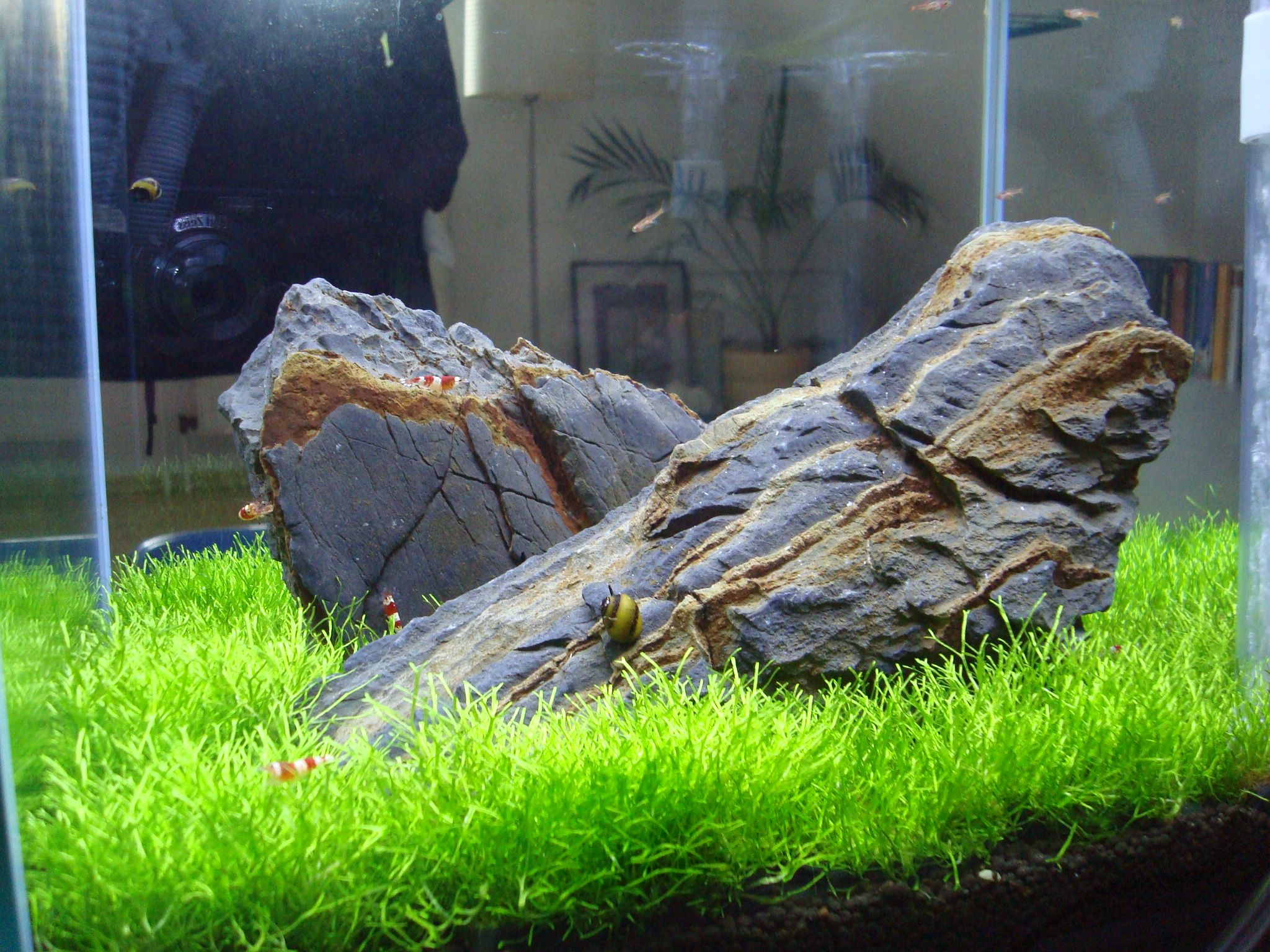 Cr Becken Mit Bodenfilter Und Riccia Fish Tank Aquascape Aquarium