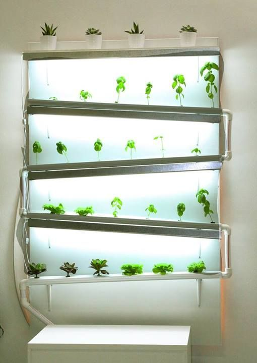 A fully functional indoor hydroponic wall growing herbs and