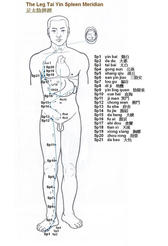 Spleen Meridian Meridian Charts Acupuncture