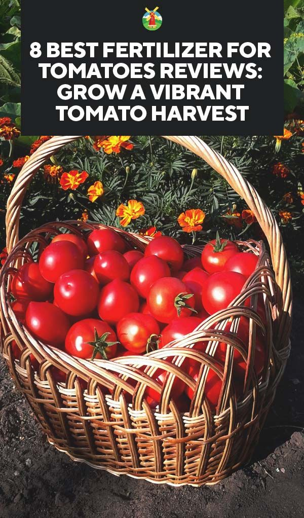 8 Best Fertilizer For Tomatoes Reviews Grow A Vibrant 640 x 480