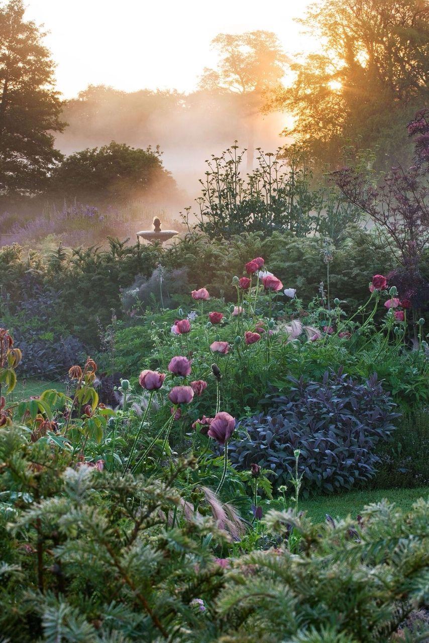 Natural garden landscape  Dreamy garden  misty morning with the early rising sun creates a