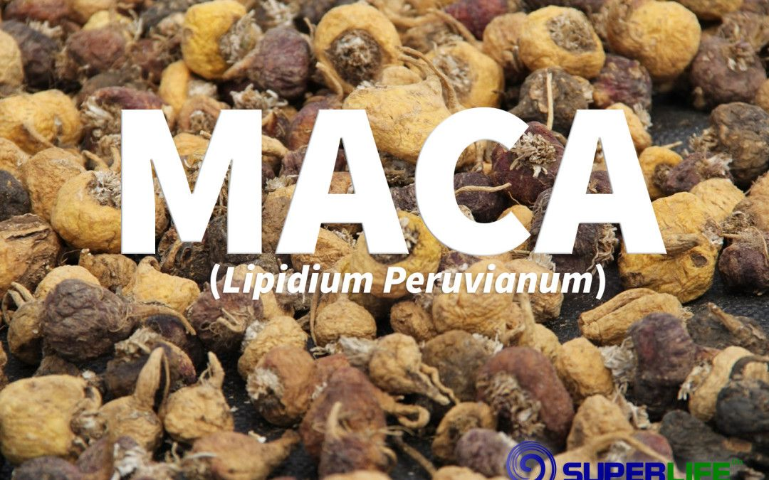 The nutritional health benefits of Maca explained. Discover how to incorporate this Superfood into your kitchen and make it a regular part of your diet.