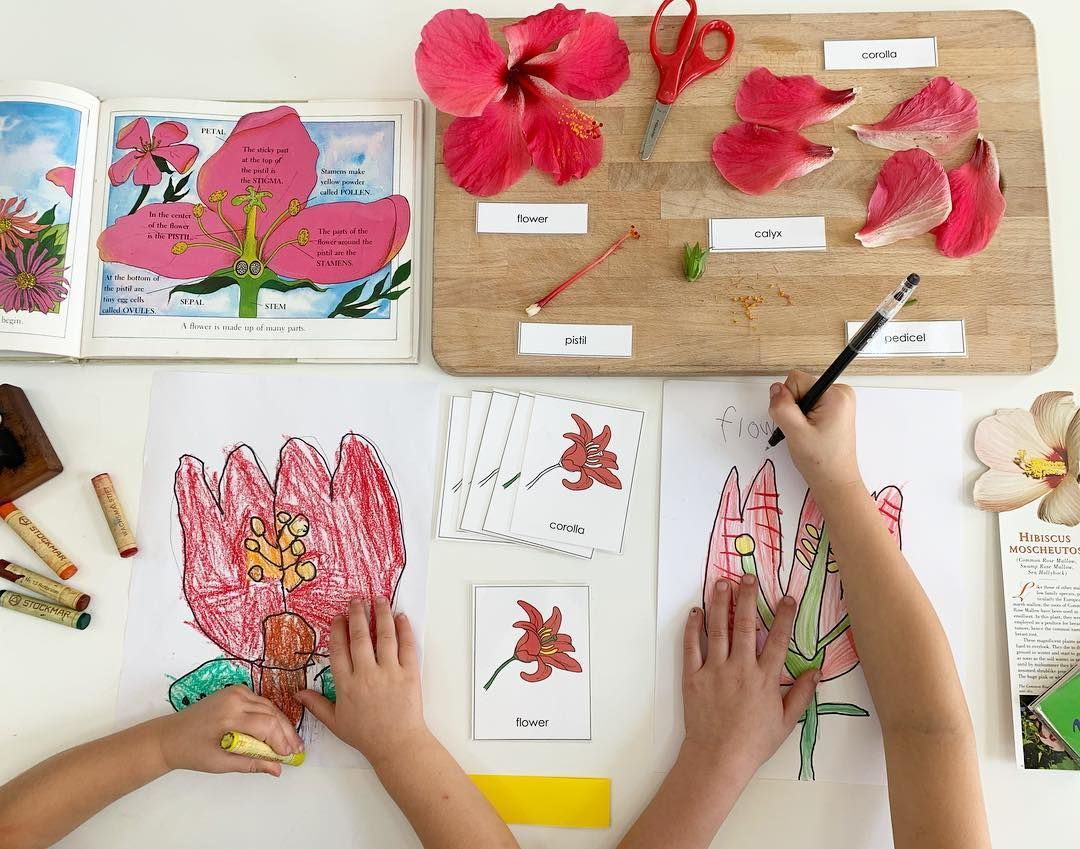 Shevonne On Instagram Studying And Dissecting The Parts Of A Hibiscus Flower With Spring Here We Are Start Blooming Flowers Hibiscus Parts Of A Flower