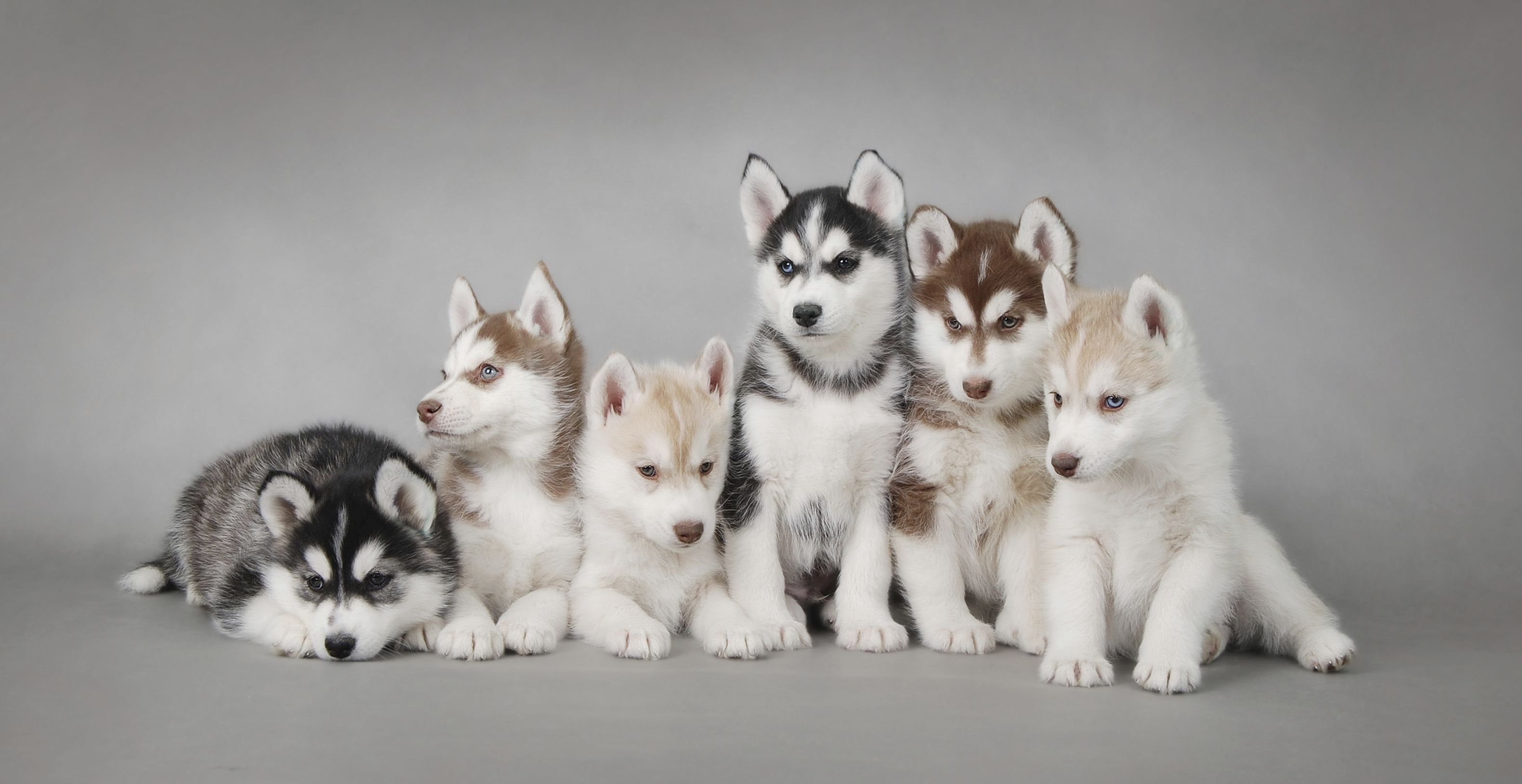 On Average Puppies And Kittens Start Playing With Their
