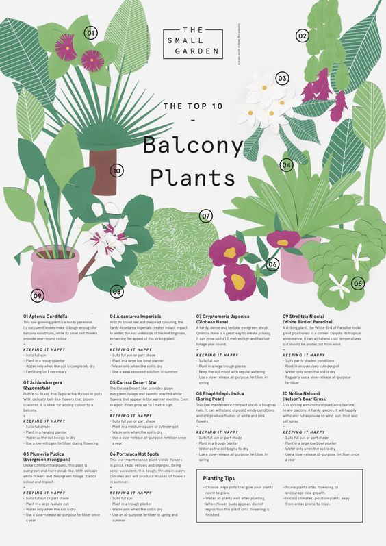The Small Garden The Top Ten Balcony Plants Downloadable Planting ...