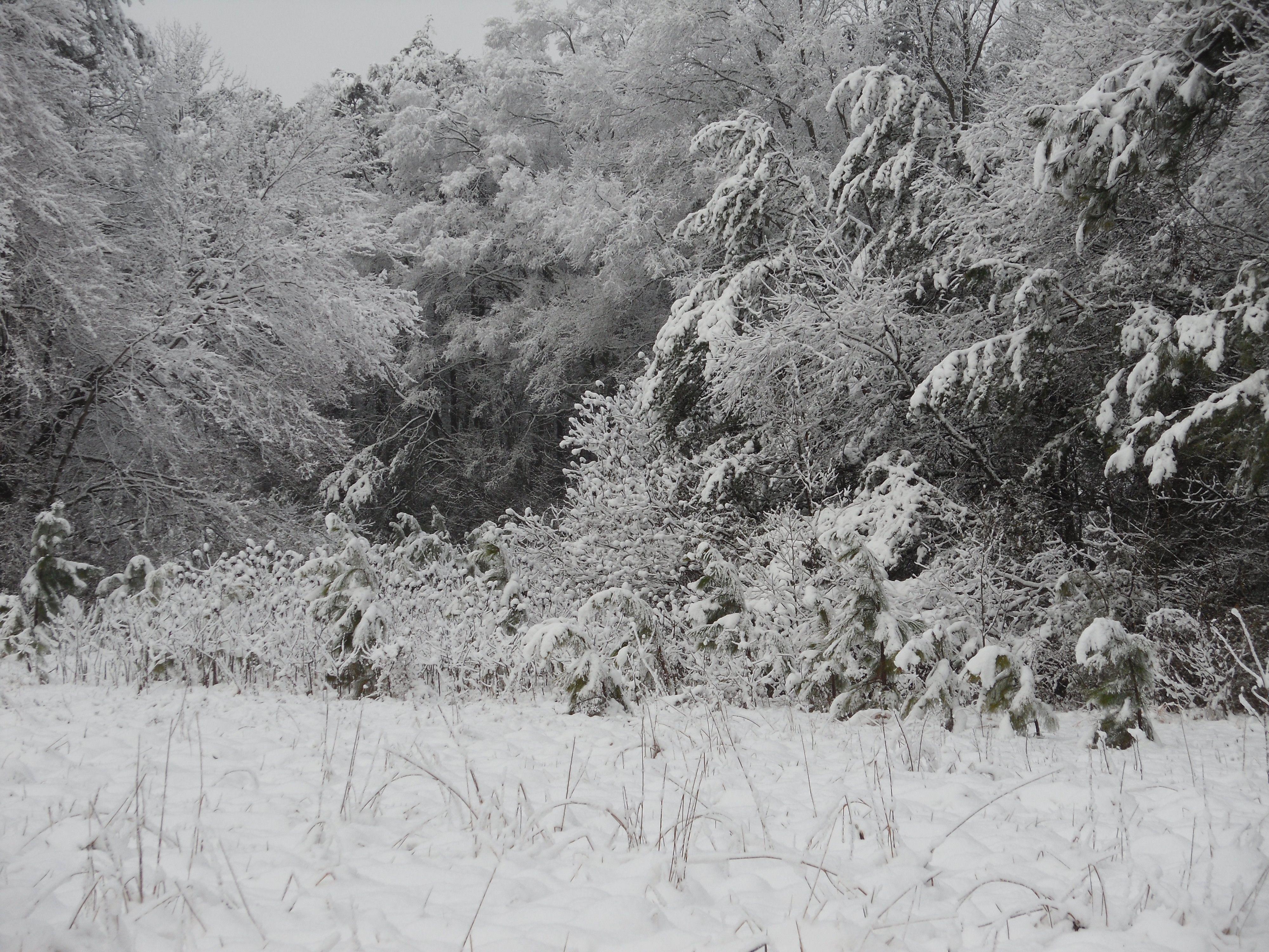Woodline, Spring Snow, 2013