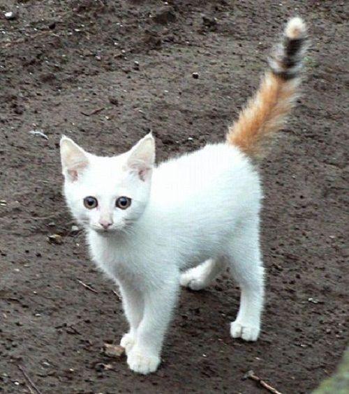 世界で最も変わった模様をもつネコ ベスト12 子猫 ペット 猫 子猫