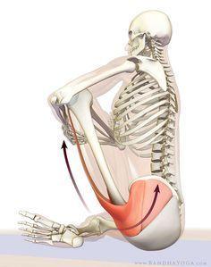 how to release the hip internal rotators for padmasana