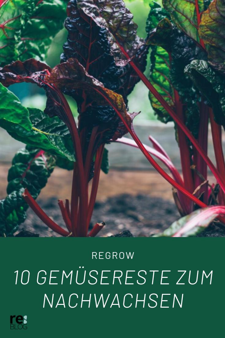 Regrow: Diese 10 Gemüsereste wachsen wieder nach
