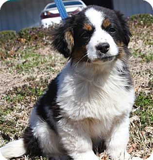 3 19 14 Westport Ct Bernese Mountain Dog Spaniel Unknown Type