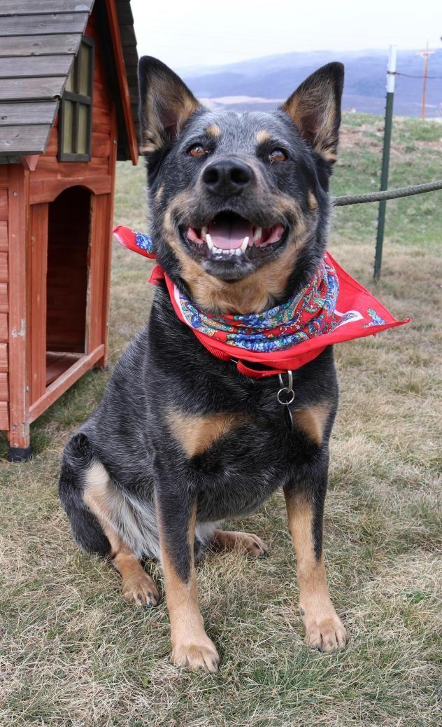 Adopt Jasper Courtesy Post On Dog Cat Dogs Animal Rescue