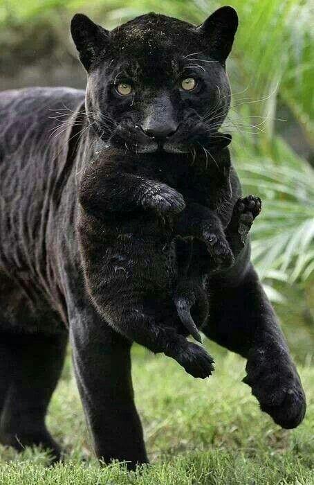 Los animales son muy lindos