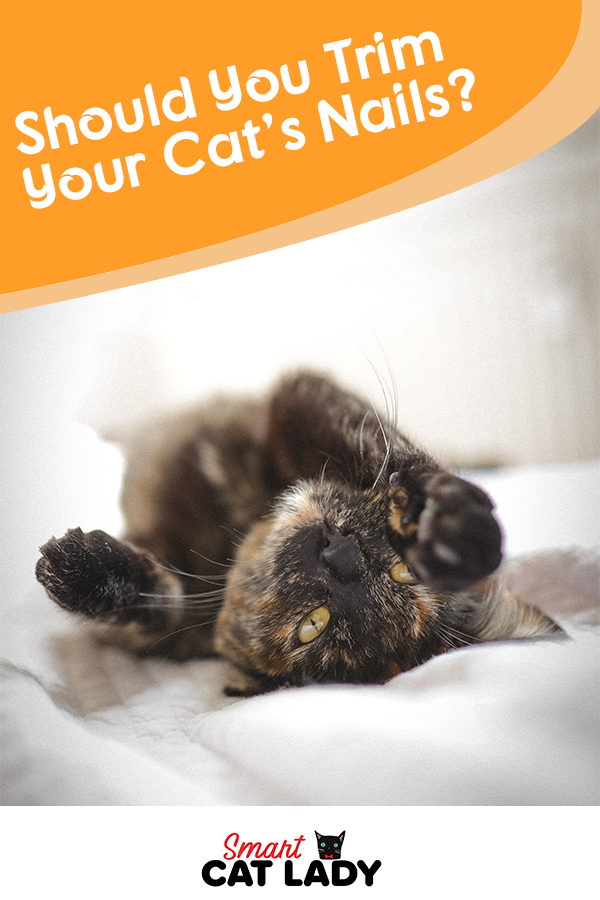 Should You Trim Your Cat S Nails In 2020 Cat Facts Cats Cat S