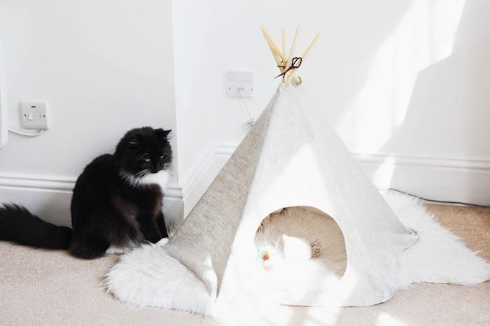 Eine Schwarze Katze Mit Grünen Augen, Ein Zimmer Mit Weißen Wänden Und  Einem Beigen Teppich