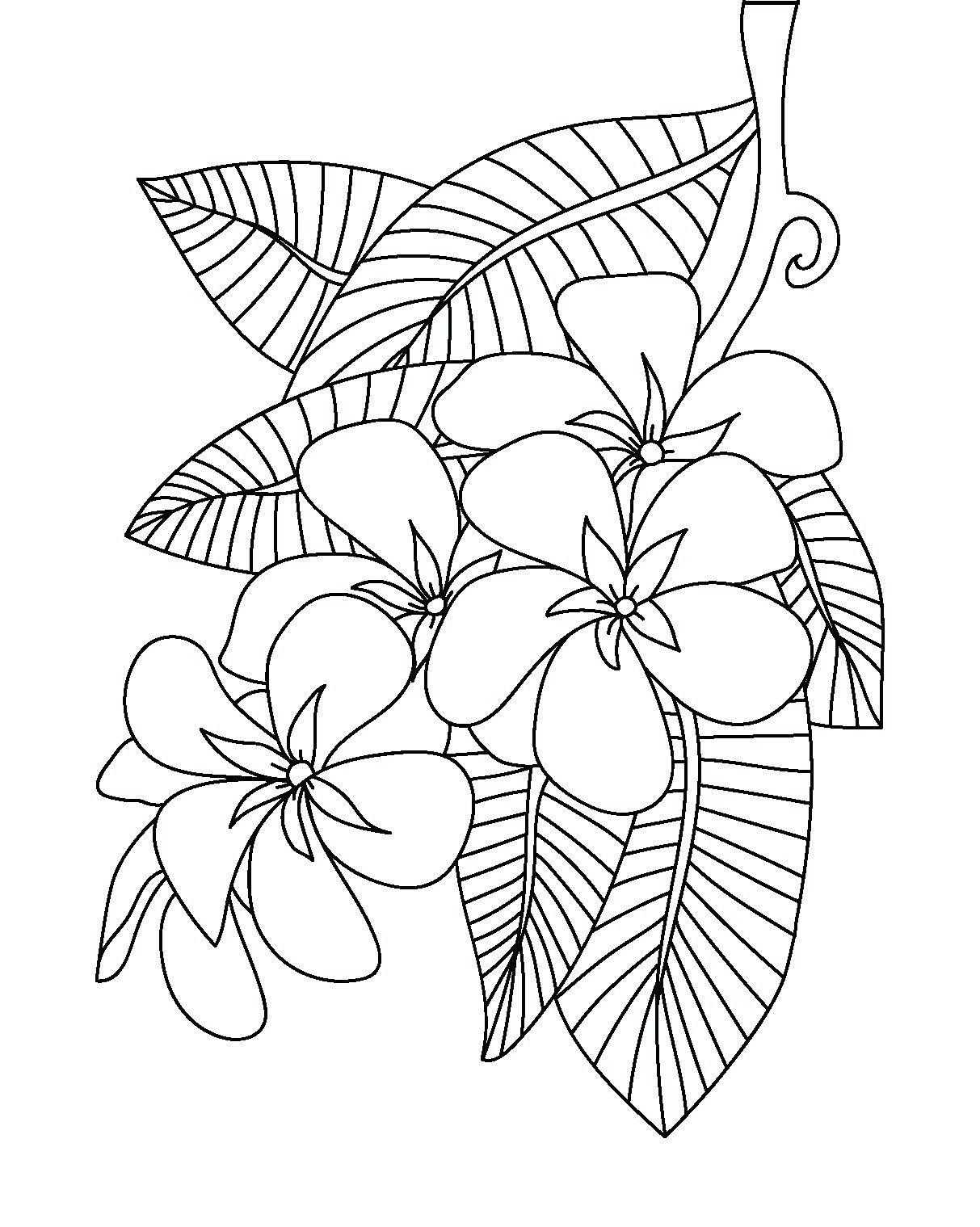 Disegni Da Colorare Fiori Hawaiani Colorarest