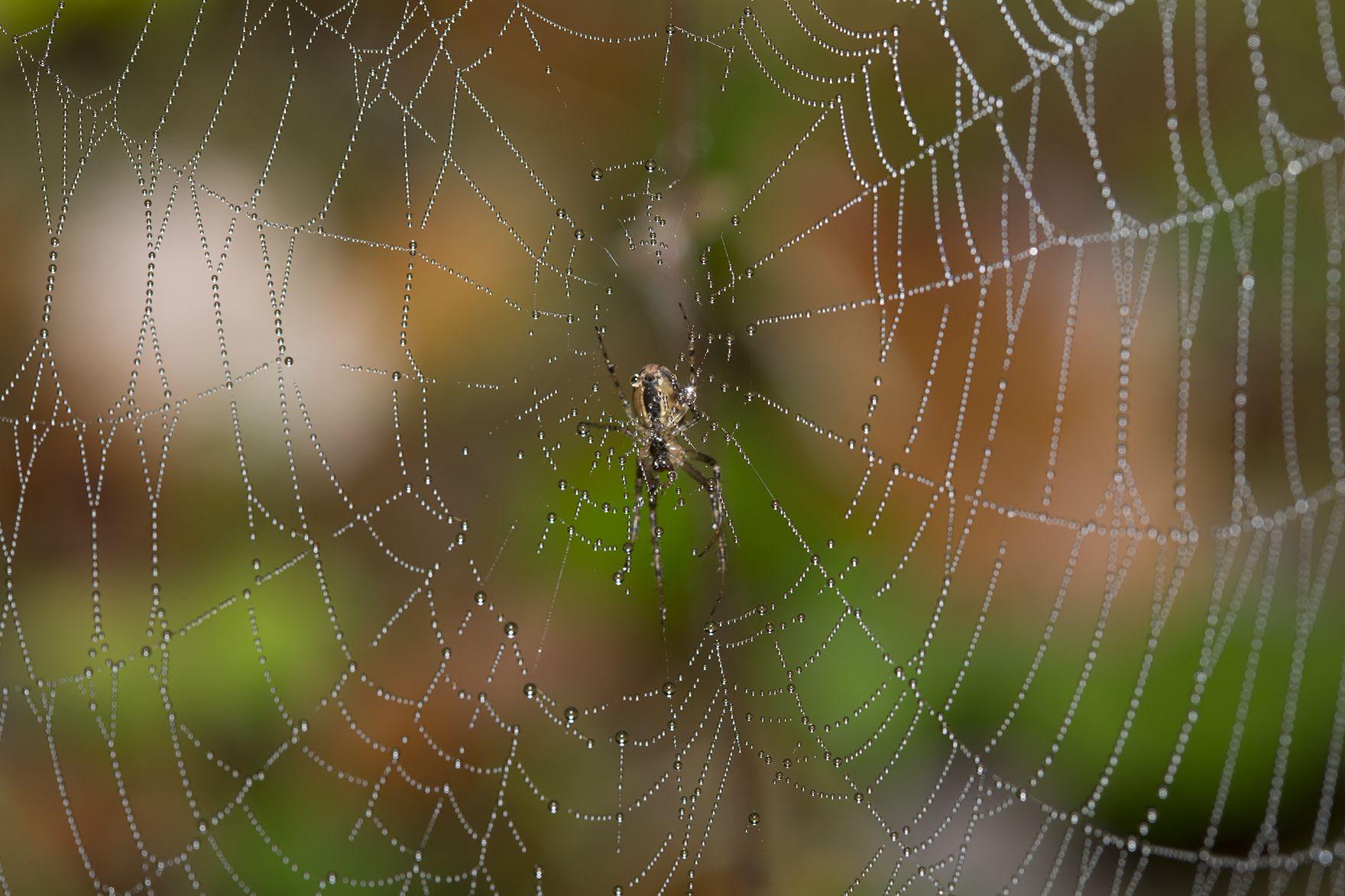 Spinnwebe im Herbst