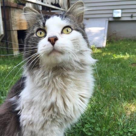 Craigslist Hartford Ct Kittens