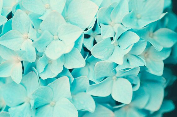 Aqua Vibrant Colors Still Life Nature Photography by loveemmy, $21.00