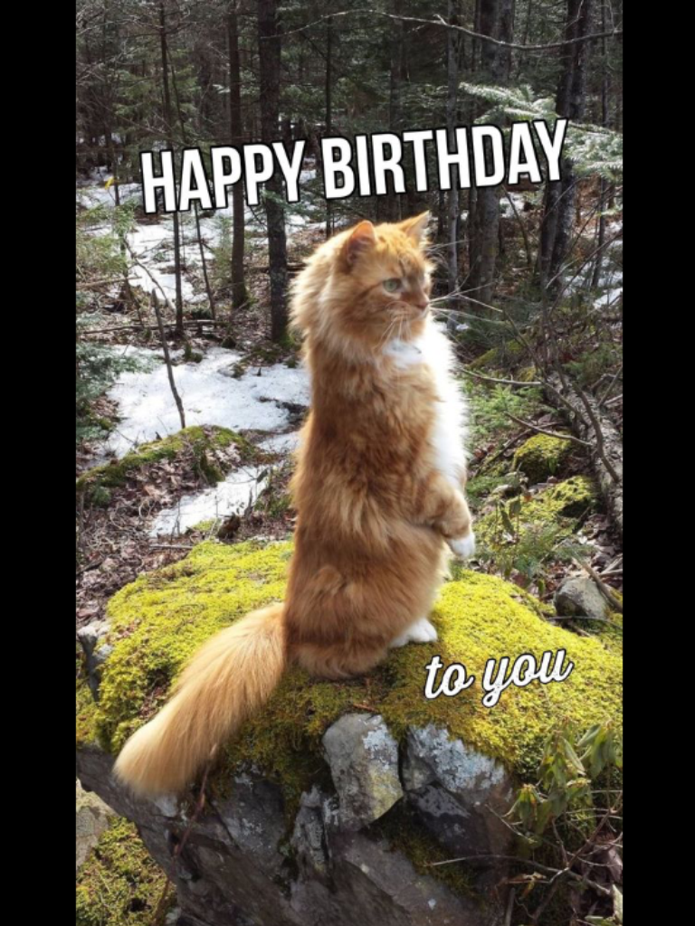 Pin by becky pyles on cat funnies pinterest happy birthday and cat happy birthday memes birthday funnies birthday greetings birthday wishes bday cards birthday board holiday sayings dog quotes beach house kristyandbryce Gallery