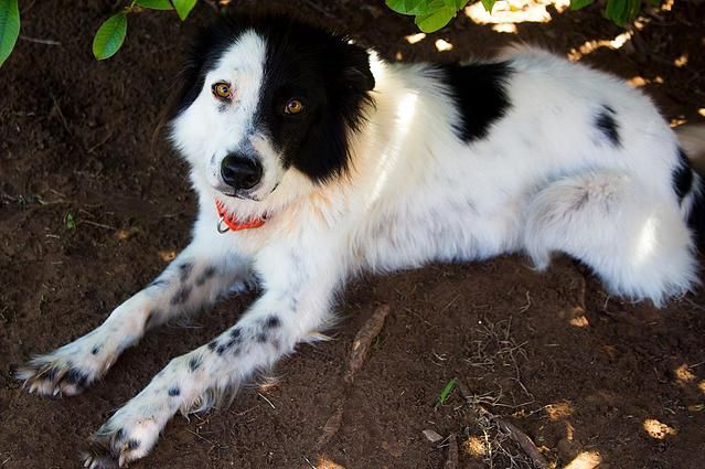 Pin By Cynthia P On Adorable Adoptable Dogs Border Collie Rescue Collie Puppies Border Collie