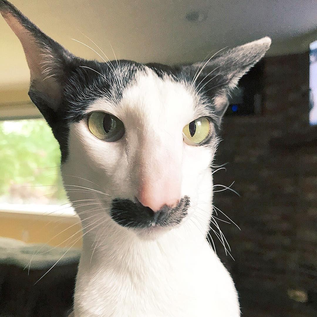 сердце картинки кошек грузин и его грузинки ваш
