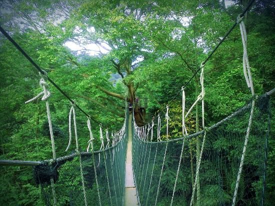 FRIM -Forest Research Institute of Malaysia canopy walk & FRIM -Forest Research Institute of Malaysia: canopy walk | Travel ...