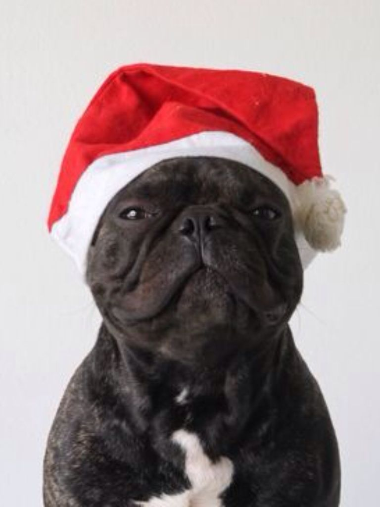 french bulldog hat quot merry christmas quot french bulldog in a santa hat french 3995