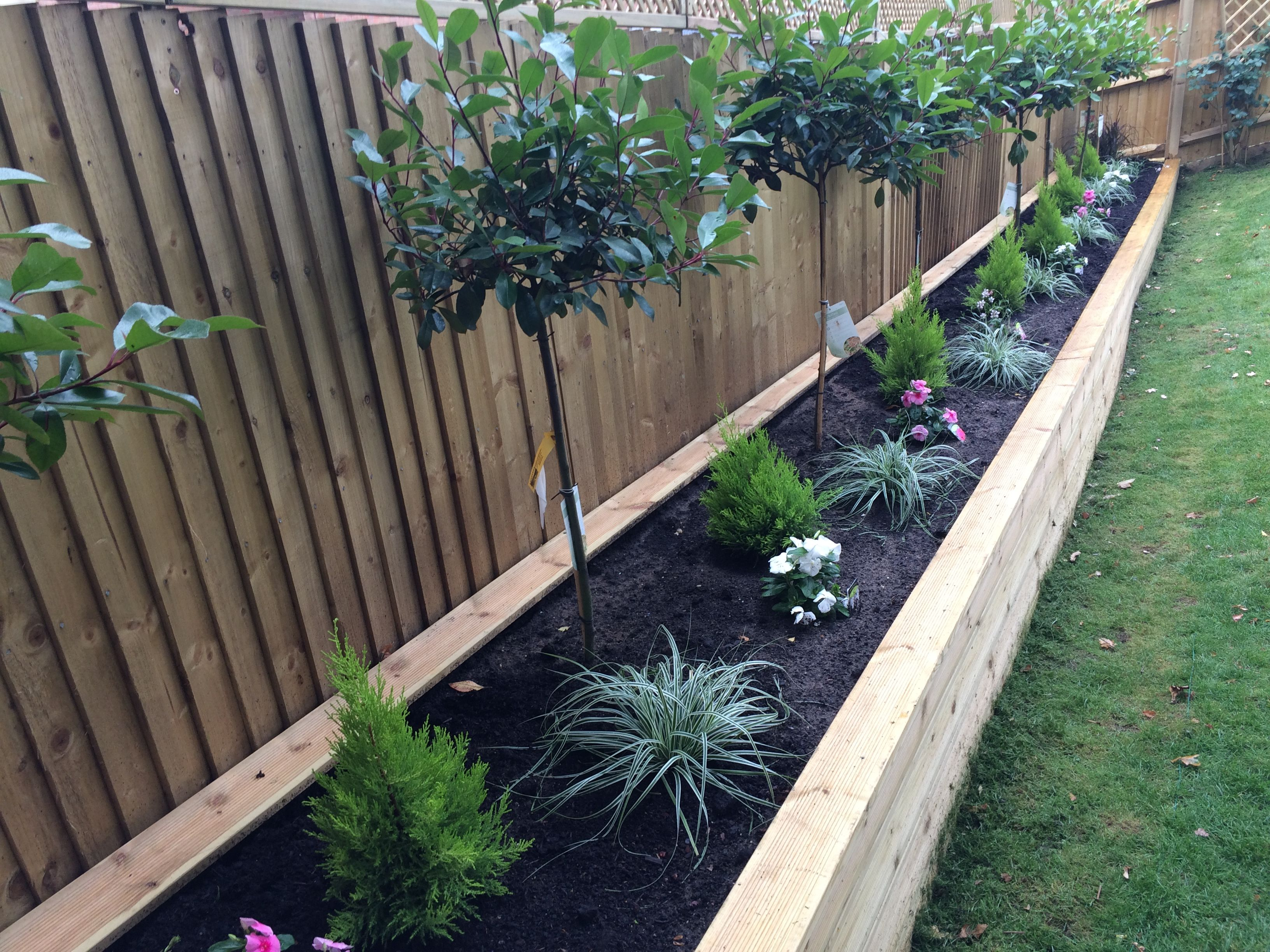 A Raised Wooden Flower Bed With Red Robin Trees, Conifers U0026 Plants.