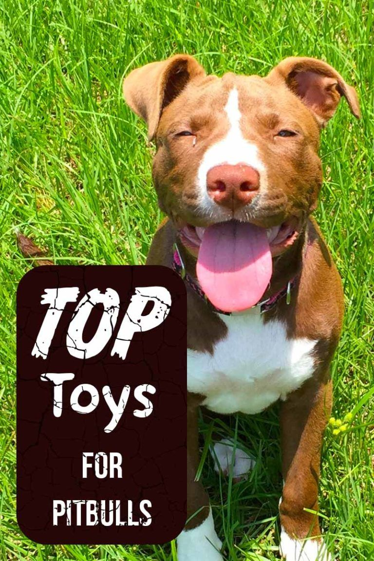 Best Pitbull Toys The Best Chew Proof Toys For Puppies And Adult