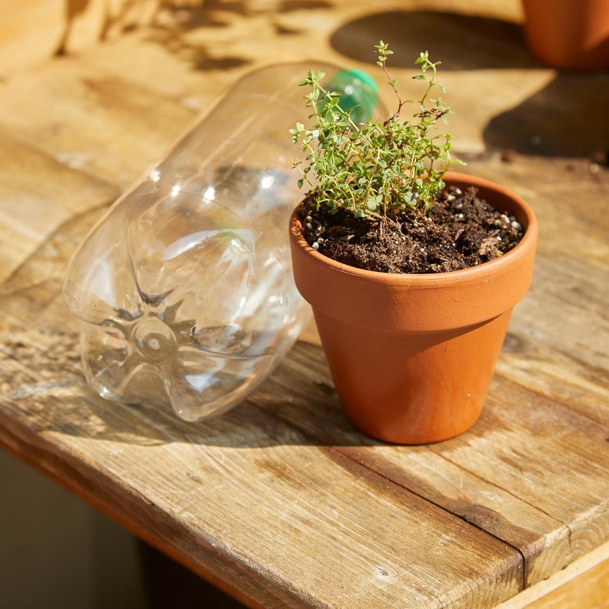 How to Create a Mini Garden Greenhouse Backyard