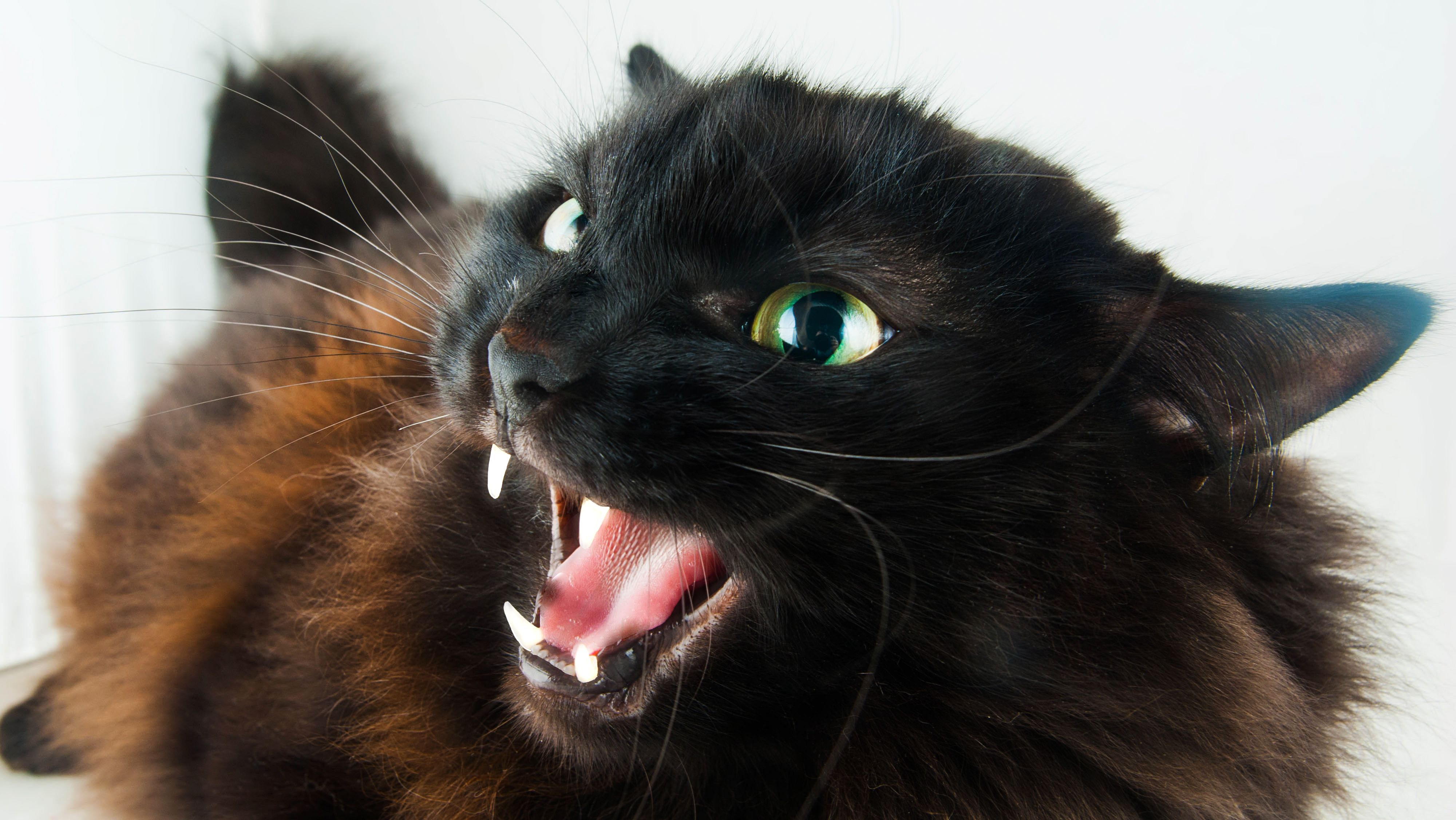 What To Do If A Cat Bites You Cats Dog Biting