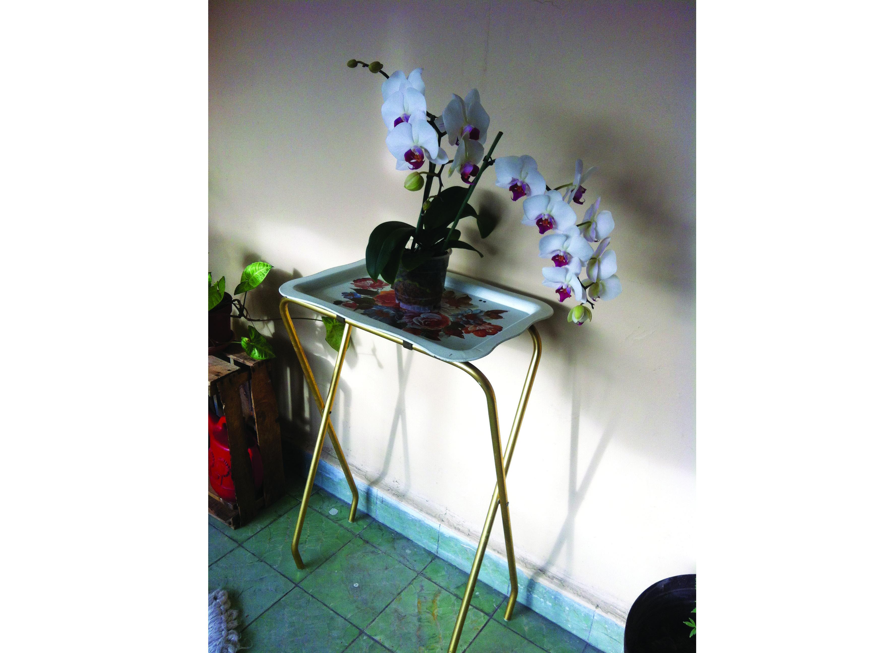 orquídeas fardel