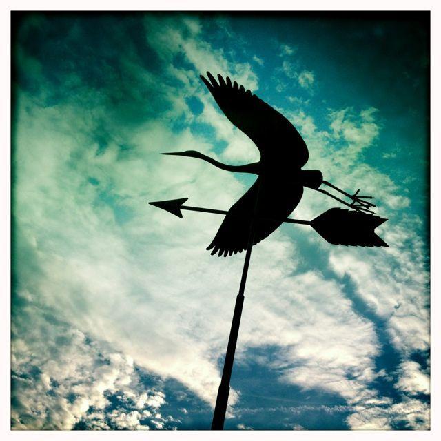 Sky Heron Vancouver photos, Sky, Vancouver