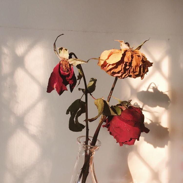 Image result for dying roses pictures